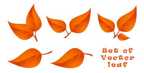Set of Vector Leaf. Autumn.