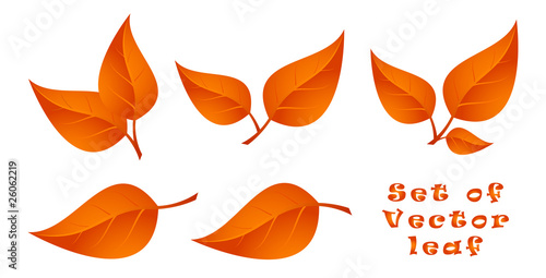 Set of Vector Leaf. Autumn.