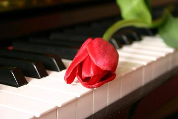 tulipano su tastiera