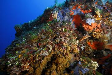 gorgonia gialla acquario