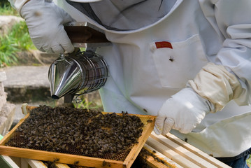 Bee Keeper Smoking Bees
