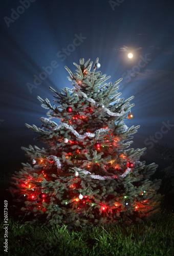 Christmas scenic photo
