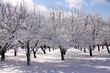 Winter Orchard