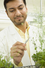 Pakistani scientist testing plant growth