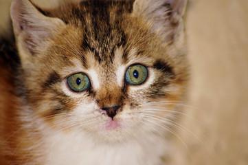 Sokak kedisi closeup