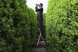 Asian businessman peering over hedge with binoculars