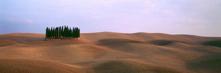 Zypressen auf Ackerlandschaft der Toskana, Italien