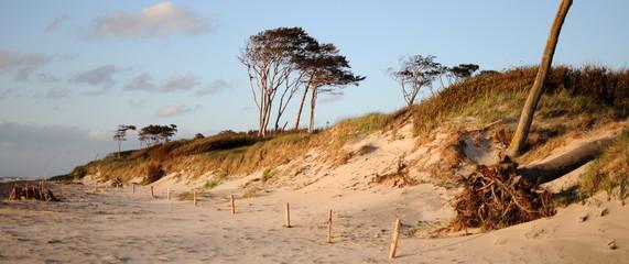 Strand mit Bäumen
