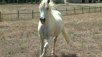 cheval au ralenti 1