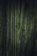 Holz hintergrund mit Spotlight grün