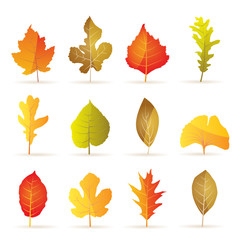 different kinds of tree autumn leaf icons