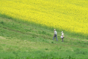 菜の花畑と中年夫婦