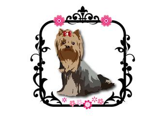 ヨークシャーテリア 犬