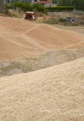 L'accumulo del grano