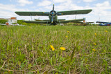 Airplane on dandelion field