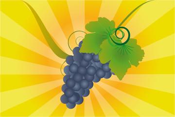 Weintraube herbstlich