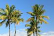 cocotiers des îles sur fond de ciel bleu outremer