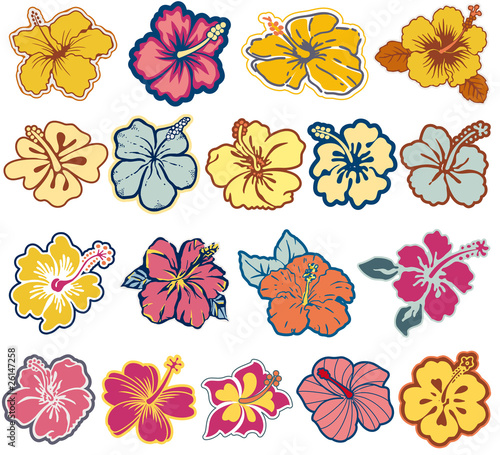 Hibiscus flowers vector icon set