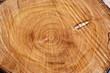 Energie renouvelable - Coeur d'arbre