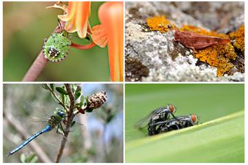 Set de cuatro insectos