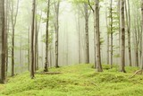 Enchanted forest with mist moving between the trees