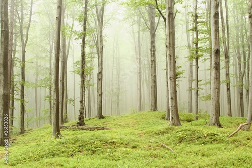 fototapete wald nebel wald pixteria. Black Bedroom Furniture Sets. Home Design Ideas