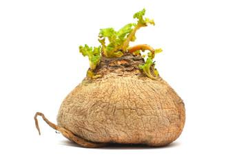 natural turnip - bio food isolated on white