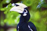 White beak hornbill. poster