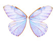 Fairy Wings - 26163000