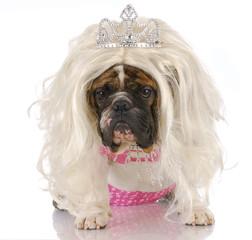 ugly princess