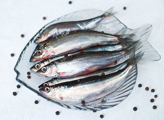 Rare fresh baltic fish vendace (Coregonus albula)