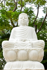 The buddha statue