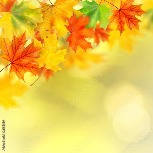 zlota-polska-jesien