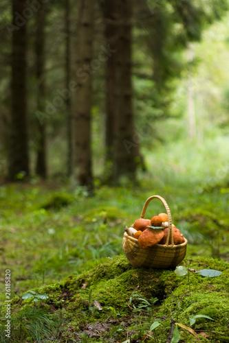 Leinwanddruck Bild Basket full of mushrooms