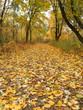 Autumn park road