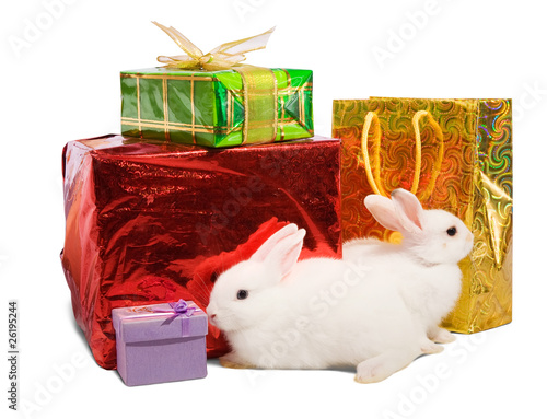 white rabbits with gifts