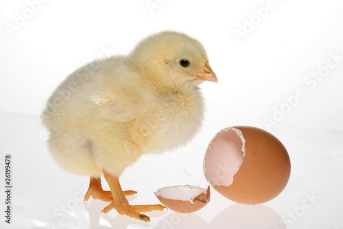 Baby Chicken & Egg