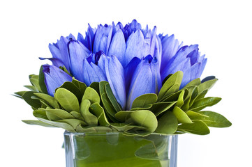 Bouquet de lotus bleus dans un vase