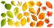 Herbstlicher Farbverlauf   autumn colour gradient