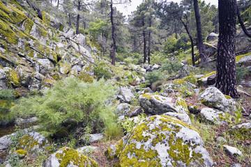 Sierra de Gredos. Garganta La Graja