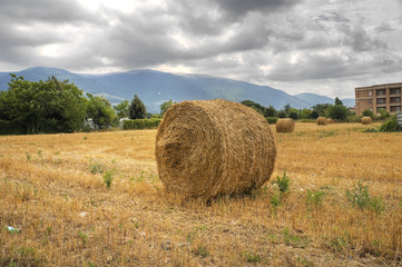 Rolling haystacks in countryside.