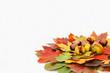 Kastanien mit Blättern