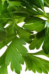Parsley leaves. Var two