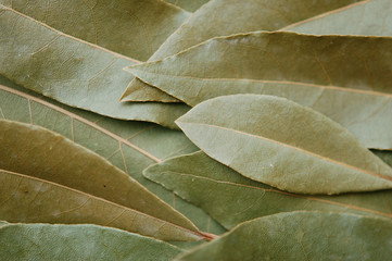 Dried laurel leaves