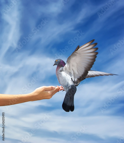 Girl feeds the dove