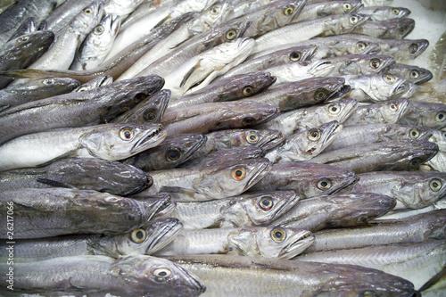 merlu à la poissonnerie