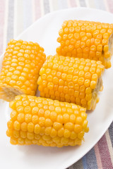 Boiled cobs of sweet corn on a white plate