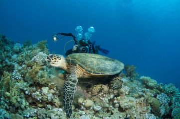 underwater photographer takes photo of turtle