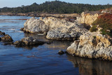 Algae and moss in the lagoon Point Lobos poster