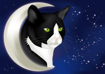 testa gatto con luna